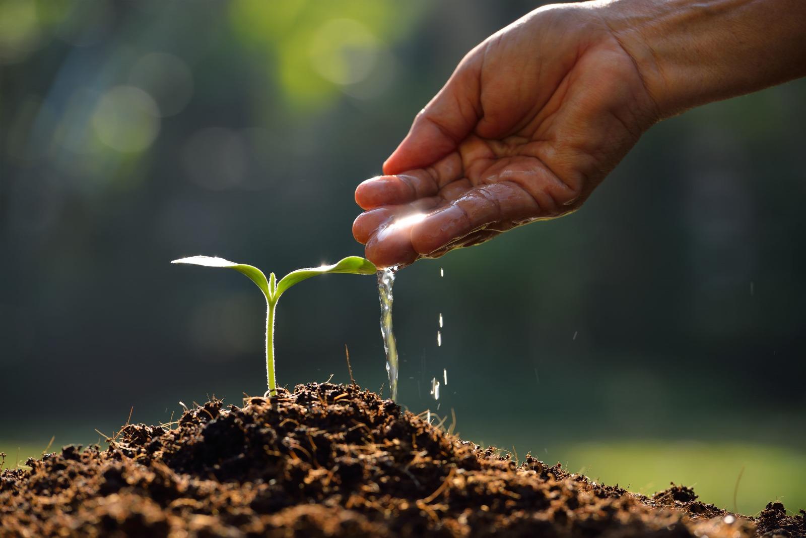 Eine Pflanze wächst aus dem Boden